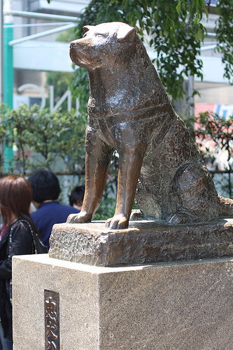 Hachiko - A faithful dog friend